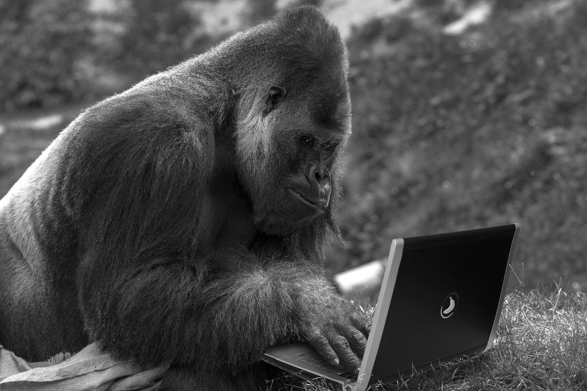 Musk fa giocare una scimmia con ilcomputer